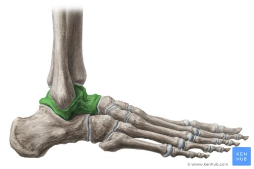 Distorsione di caviglia: l'importanza di riconoscere i sintomi